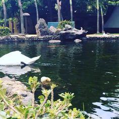 Beautiful day at Caribe Hilton's Tropical Gardens! #CaribeHilton #PuertoRico #seepuertorico
