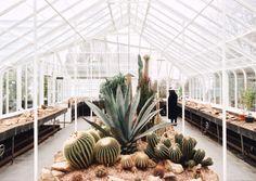 green house dreams