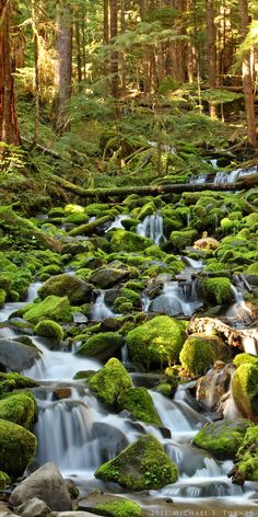 Mossy Creek along Sol Duc Falls Trail, Olympic National Park - Michael Turner Foto Nature, Image Nature, Beautiful Waterfalls, Beautiful Landscapes, The Places Youll Go, Places To Visit, Beautiful World, Beautiful Places, Les Continents