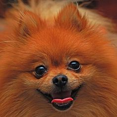 I'm a sucker for a cute pom.