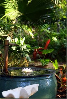 Small container ponds fit in any corner of the garden, deck or patio. For more ideas, please visit www.ContainerWaterGardens.net