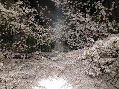 나카메구로 하나미