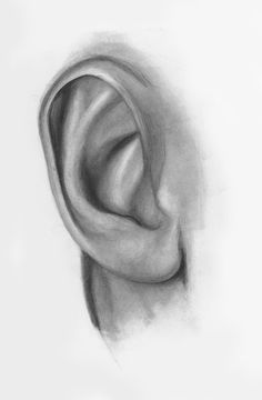 Drawing For Beginners Drawing Ears Demo, Step 3 How To Draw Ears, How To Make Drawing, Learn To Draw, Draw Eyes, Learn Drawing, Drawing Techniques, Drawing Tips, Drawing Sketches, Drawing Drawing