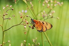 Butterfly_pxt1 by Ndi Nardi -  Click on the image to enlarge.