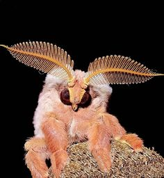 Moths are adorable!