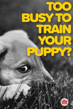 Have a new puppy but don't seem to have the time to train your puppy? Check out these puppy training tips for the super busy dog mom or dad on how to fit quality dog training into your busy schedule. #puppies #puppytraining #dogs #dogtraining