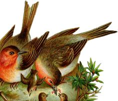 Vintage Robins Image – with Nest and Babies!