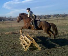 Home Made Horse Jumps - lots of ideas and how-to's for making your own jumps for cheap! Love this site!!!