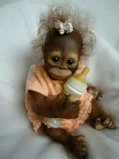 Adorable little monkey doll