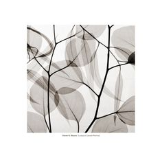 Eucalytus Leaves [Positive] Wall Art Print (€32) ❤ liked on Polyvore featuring home, home decor, wall art, leaf wall art, home wall decor, floral home decor and interior wall decor