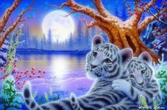 White Baby Tigers - love four seasons, rivers, big wild cats, xmas and new year, white tigers, paintings, cats, snow, animals, winter, moons, wildlife