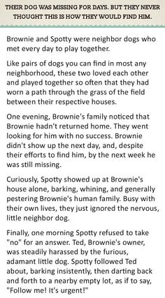 Their Dog Was Missing For Days. But They Never Thought This Is How They Would Find Him.