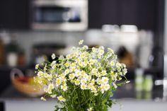 New Darlings - Summer blooms