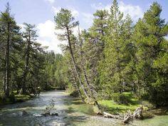 Bei einer Wanderung im Nationalpark Aigüestortes  plätschern die Nebenflüsse des Flusses Noguera Pallaresa vorbei.