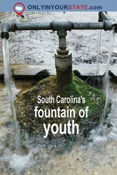 Few People Know About The South Carolina Fountain Of Youth, God's Acre Healing Springs South Carolina Vacation, North Carolina, Beautiful Vacation Spots, Beautiful Places, Hiking Places, East Coast Road Trip, Hidden Beach, Fountain Of Youth, United States Travel