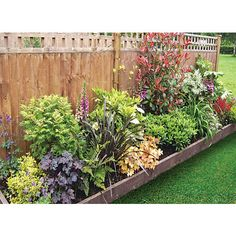 Find Shady Border Collection - x at Homebase. Visit your local store for the widest range of garden & outdoor products. Garden Border Plants, Garden Shrubs, Garden Planters, Shade Garden, Garden Beds, Small Garden Borders, Shrubs For Borders, Boarder Plants, Cottage Garden Borders