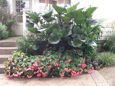 Get inspired with container gardening ideas Begonia, Tropical Garden, Water Features, Will Smith, Container Gardening, Coffee Cups, New Homes, Plants, Gardens