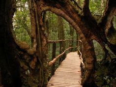 Forest Bridge, Costa Rica