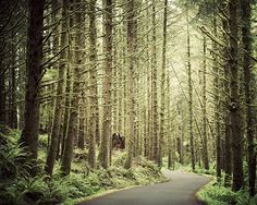 Oregon Forest Photograph - Winding Road, Path, Trees, Moss Green, Olive, Spring, Nature Photography, Woodland - Making Inroads