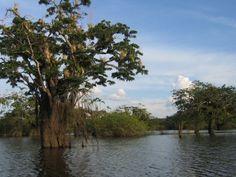 Parque Nacional Cuyabeno