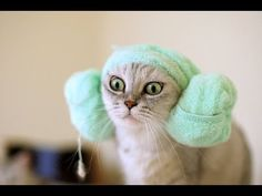 Epic Funny Cat Compilation with Sound Effects - http://www.kittytalent.com/2014/12/epic-funny-cat-compilation-with-sound-effects/