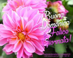CDB CARTOLINE Compleanno per Tutti i Gusti! : Cartolina Buona Domenica e Felice Giornata! con Im...