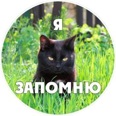 Comments in Topic Hip Hop Abs, Russian Beauty, Stupid Memes, Smiley, Cats And Kittens, Life Quotes, Illustration, Funny, Cards