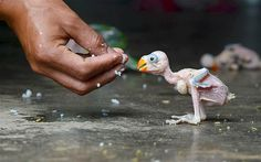 An Indian parrot hatchling being fed by hand - Imgur