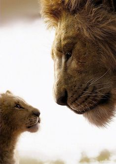 The Lion King Teljes Film Magyarul online filmnézés # Lion King Quotes, Lion King Art, Lion King Movie, Lion Art, Disney Lion King, The Lion King, Lion King Pictures, Lion Images, Images Of Lions