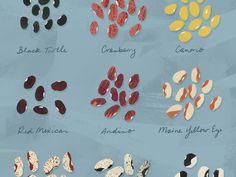 Remedy Quarterly . Bean Guide