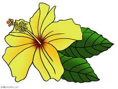 hawaii state flower - Google Search