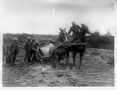 A great example of the horses ability to pull through artillery through muddy fields in WW1. This is from Ypres where the mud was so deep without wooden planks most of the fields were impassable. Horses were still used by the Cavalry in WW1 where weapons were not as sophisticated or ranged as WW2.