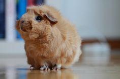 little fluffy sweety