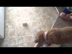 Cow Hit The Cycle Must watch Funny Cats and Dog