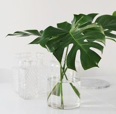 7 stunning leaf & branch arrangements - links - Trace | Style | Create | Live