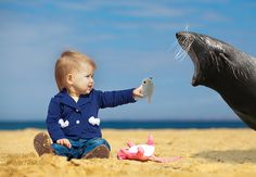 Seal Beach #seals #sharing #cute