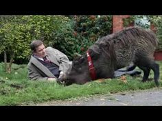 Will the warthog ever replace the dog as man's best friend?Canal+ and BETC Paris are Hogging All the Drama this Christmas Mans Best Friend, Best Friends, Types Of Shots, Video Advertising, Christmas Ad, Tv Commercials, Creative Director, Pet Dogs, Lion Sculpture