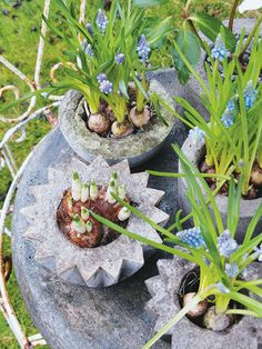 fabulous concrete planters!!! love this so much!