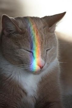 "Rainbow kitty cat - like being caught in a ray of sunshine - cats cant resist ""light"" naps :)"