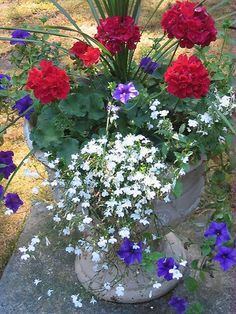Container gardening and Pot Ideas, discover the gardening post tip # 4070243834 to planting our favorite herbs in a pot. Container Flowers, Flower Planters, Flower Pots, Full Sun Container Plants, White And Blue Flowers, Pot Jardin, Red Geraniums, Geraniums Garden, Pot Plante