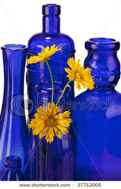 Beautiful cobalt blue bottles and vases with bright yellow flowers isolated on white - buy this stock photo on Shutterstock & find other images. Im Blue, Love Blue, Blue Yellow, Blue And White, Bright Yellow, Golden Yellow, Color Blue, Bleu Cobalt, Cobalt Glass