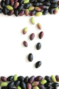 """Comienza la cosecha. Aceitunas variedad""""cornicabra"""". Ciudad Real"""
