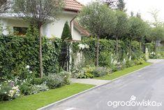 Ogród nie tylko bukszpanowy - część II - strona 518 - Forum ogrodnicze - Ogrodowisko