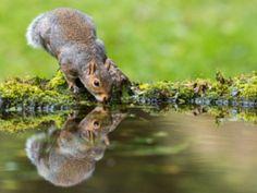 Sipping Wiewiórka - Zdjęcia
