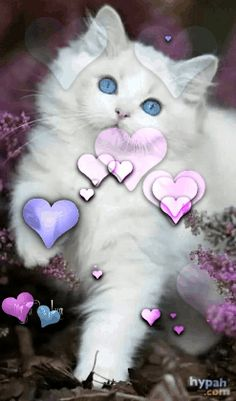 Stars Dazzle In The Mystic Night – This site is designed To Inspire, To Heal, To Motivate and To Thrive! Beautiful Kittens, Beautiful Gif, Cute Cats, Funny Cats, Pet Psychic, Pet Grief, Baby Animals, Cute Animals, Kitten Images