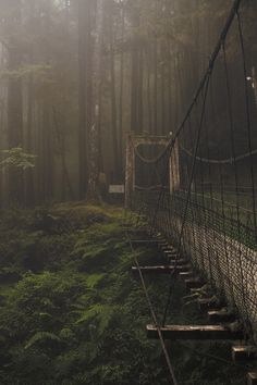 Bridge connecting the two parts of the Forest in Alishan, Taiwan