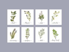 Instant Download Watercolor Herbs by CloudNinePrintStudio on Etsy