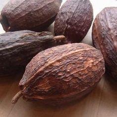 カカオ(cacao)の実の殻 小(中身なし) - 軽井沢  ジャムこばやし ロシア人直伝のジャム