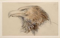 The Head of a common Golden Eagle, from Life John Ruskin, 8 - 11 September 1870 © University of Oxford - Ashmolean Museum
