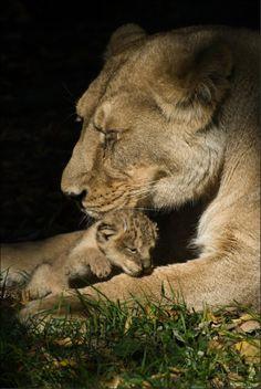 Asha and Cub